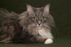 γάτα 002 Στοκ εικόνες με δικαίωμα ελεύθερης χρήσης
