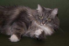 γάτα 003 Στοκ φωτογραφία με δικαίωμα ελεύθερης χρήσης