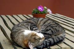 γάτα 01 Στοκ φωτογραφία με δικαίωμα ελεύθερης χρήσης
