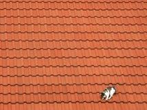 γάτα 04 Στοκ Φωτογραφία