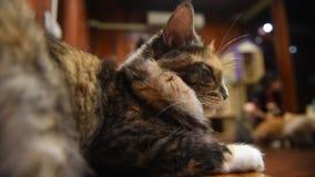Γάτα απόθεμα βίντεο