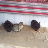 γάτα 3 στοκ φωτογραφία με δικαίωμα ελεύθερης χρήσης