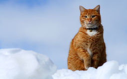 γάτα 14 που φαίνεται τιγρέ κίτ Στοκ Εικόνες