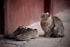 γάτα 2 Στοκ Εικόνες