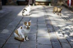 Γάτα Στοκ φωτογραφίες με δικαίωμα ελεύθερης χρήσης