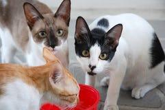 γάτα 3 χαριτωμένη στοκ φωτογραφία με δικαίωμα ελεύθερης χρήσης