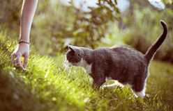 Γάτα-10 Στοκ φωτογραφία με δικαίωμα ελεύθερης χρήσης