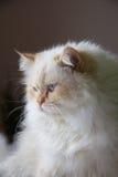 Γάτα Στοκ εικόνες με δικαίωμα ελεύθερης χρήσης