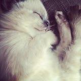 Γάτα Στοκ Φωτογραφίες