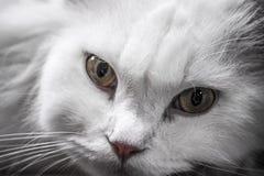 Γάτα Στοκ Φωτογραφία