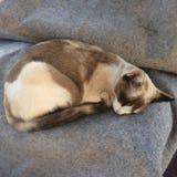 1 γάτα Στοκ φωτογραφία με δικαίωμα ελεύθερης χρήσης