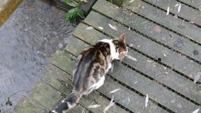 Γάτα φιλμ μικρού μήκους