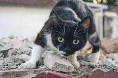 Γάτα Στοκ Εικόνα