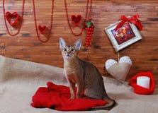 Γάτα Abyssinian στοκ φωτογραφίες με δικαίωμα ελεύθερης χρήσης