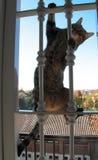 Γάτα Acrobatics Στοκ Φωτογραφία