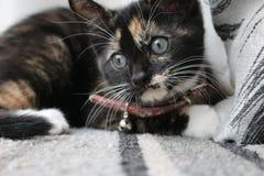 Γάτα Adoring που εξετάζει τη κάμερα Στοκ Φωτογραφίες