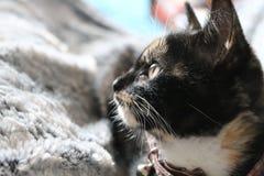 Γάτα Adoring που εξετάζει τη κάμερα Στοκ εικόνες με δικαίωμα ελεύθερης χρήσης
