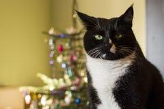 Γάτα Black&white και χριστουγεννιάτικο δέντρο Στοκ φωτογραφίες με δικαίωμα ελεύθερης χρήσης