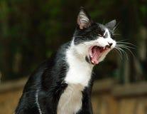 γάτα bw Στοκ Εικόνα