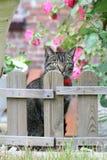 γάτα courious Στοκ Εικόνα