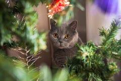 Γάτα Cristmas στοκ φωτογραφία με δικαίωμα ελεύθερης χρήσης
