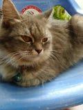 Γάτα Cuties στοκ εικόνα με δικαίωμα ελεύθερης χρήσης