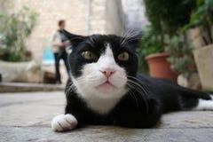 γάτα dubrovnik Στοκ Εικόνες