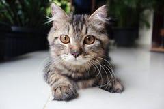 Γάτα Exspression Στοκ Εικόνες