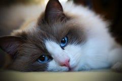 Γάτα Filippo στοκ φωτογραφία με δικαίωμα ελεύθερης χρήσης