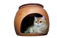 Γάτα Garfield που απομονώνεται στο εσωτερικό Στοκ Εικόνα