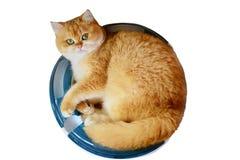 Γάτα Garfield που απομονώνεται Στοκ εικόνα με δικαίωμα ελεύθερης χρήσης
