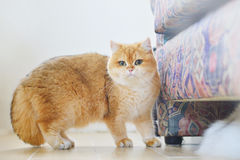 Γάτα Garfield Στοκ φωτογραφίες με δικαίωμα ελεύθερης χρήσης