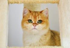 Γάτα Garfield Στοκ φωτογραφία με δικαίωμα ελεύθερης χρήσης