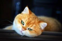Γάτα Garfield Στοκ Φωτογραφία