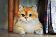 Γάτα Garfield Στοκ Εικόνα