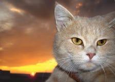 γάτα levik Στοκ φωτογραφία με δικαίωμα ελεύθερης χρήσης