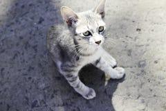 Γάτα Litle Στοκ εικόνες με δικαίωμα ελεύθερης χρήσης