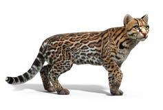 Γάτα Ocelot Απεικόνιση αποθεμάτων