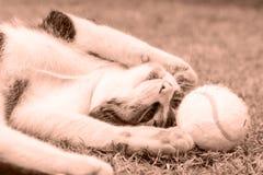 Γάτα Peppy (σέπια) Στοκ Φωτογραφίες