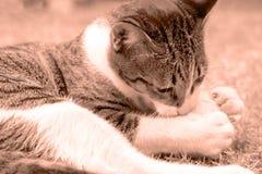 Γάτα Peppy (σέπια) Στοκ φωτογραφία με δικαίωμα ελεύθερης χρήσης