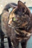Γάτα PET Στοκ εικόνα με δικαίωμα ελεύθερης χρήσης