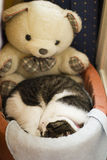 Γάτα PET Στοκ φωτογραφίες με δικαίωμα ελεύθερης χρήσης