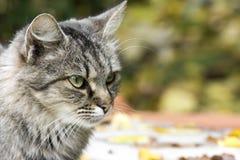 Γάτα Portre Στοκ εικόνα με δικαίωμα ελεύθερης χρήσης