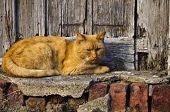 γάτα redhead Στοκ Φωτογραφίες