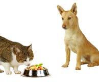 γάτα s στοκ εικόνα με δικαίωμα ελεύθερης χρήσης