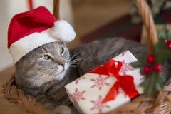 Γάτα Santa σε ένα καλάθι Στοκ φωτογραφία με δικαίωμα ελεύθερης χρήσης