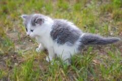 γάτα scardy Στοκ φωτογραφία με δικαίωμα ελεύθερης χρήσης