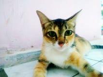 Γάτα Selfie στοκ φωτογραφία με δικαίωμα ελεύθερης χρήσης