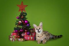 Γάτα Serval δίπλα σε ένα χριστουγεννιάτικο δέντρο και δώρα σε ένα πράσινο backgro Στοκ Εικόνα