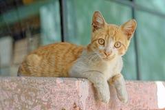Γάτα Stairing στοκ φωτογραφίες με δικαίωμα ελεύθερης χρήσης